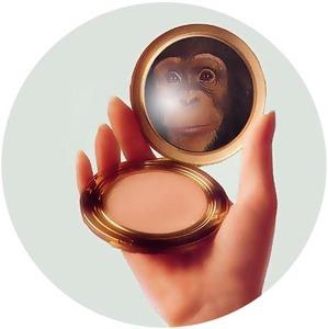 Monkeycompact